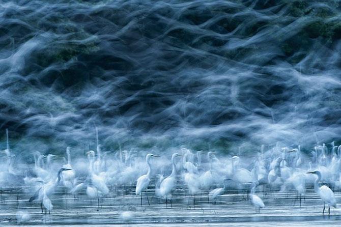 10 прекраснейших птиц планеты